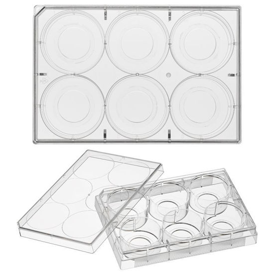 GLASS BOTTOM CELL CULTURE PLATES