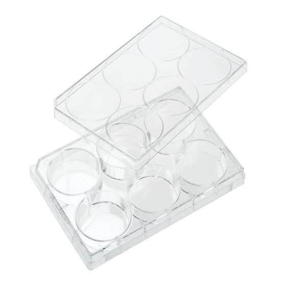 PLATES, NON-TREATED, 6 WELL, FLAT BOTTOM, STERILE, WITH LIDS